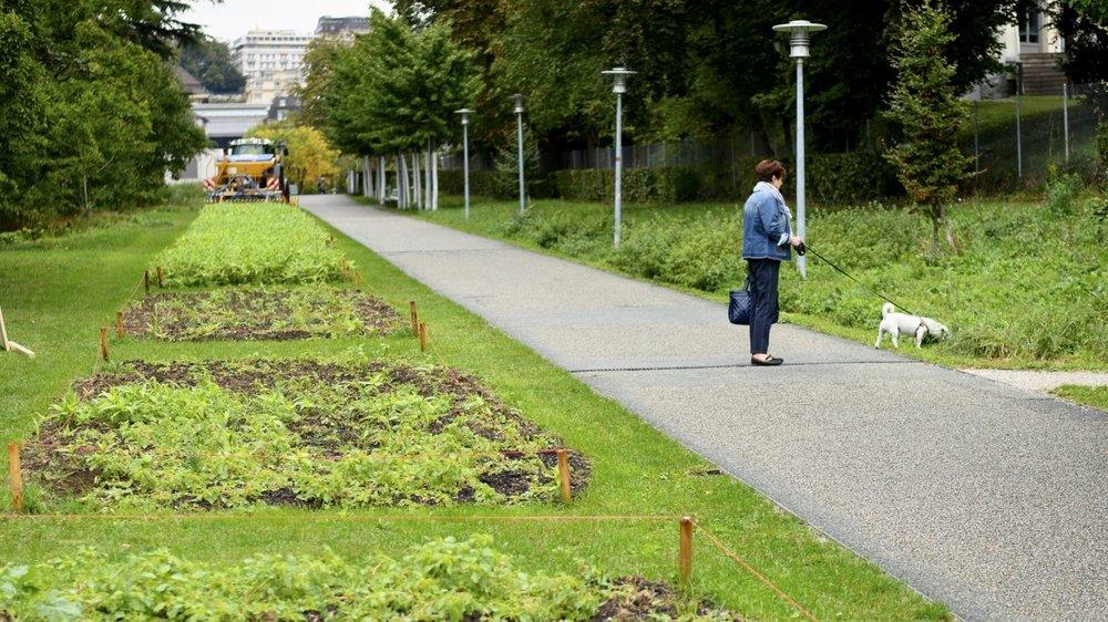 Une personne promène son chien à côté d'une des onze miniparcelles, au centre de Lausanne.