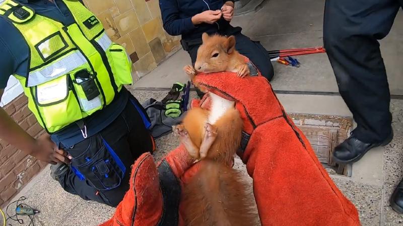 Allemagne: coincé dans une grille, un petit écureuil rencontre ses «anges gardiens»