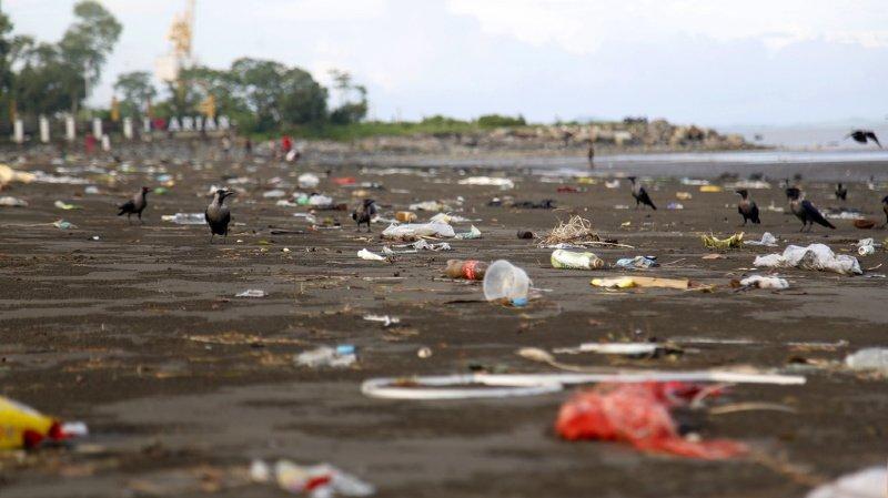 Environnement: des Etats veulent inverser les atteintes à la nature d'ici 2030