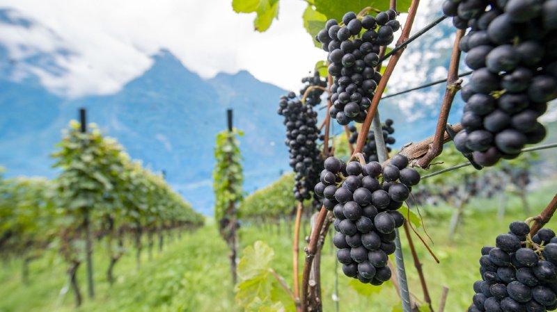 La crise du coronavirus a durement affecté les vignerons, tout en leur réservant aussi quelques bonnes surprises avec notamment une hausse de la clientèle privée. (illustration)