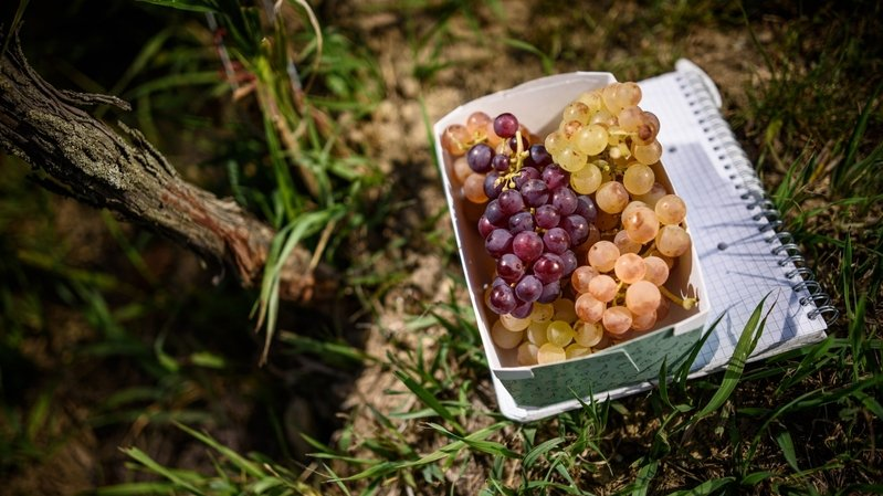 Connaissez-vous bien le terroir viticole de La Côte?