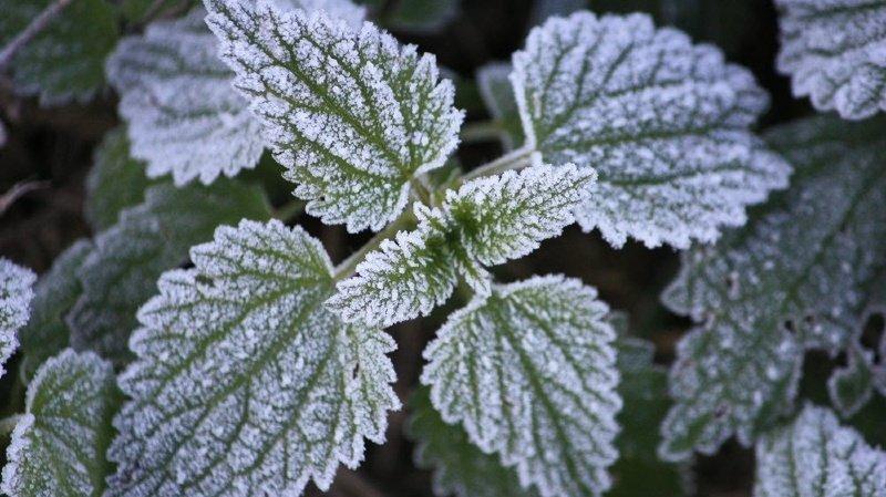 Météo: arrivée des premières gelées