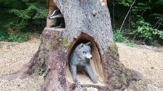 Montricher: rencontre singulière avec un loup, un lynx et une vipère