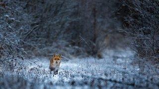 Ce photographe de Nyon sublime la vie sauvage de la région