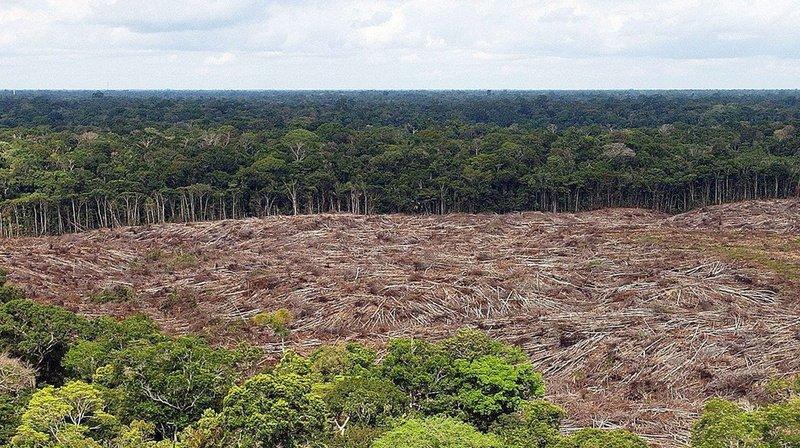 Environnement: une étude pour savoir quel type de forêt pour mieux stocker le CO2