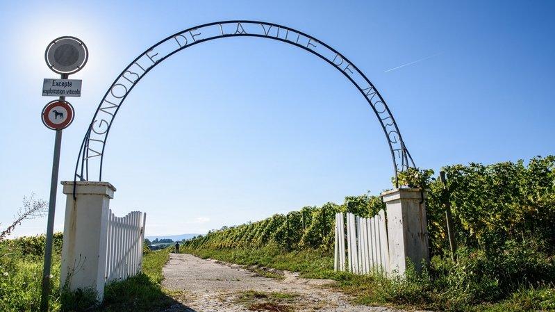 Morges: Bolle exploitera le vignoble communal