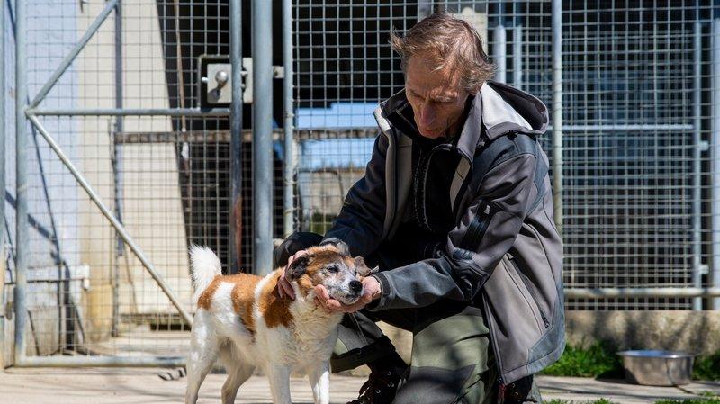 Vaud: pas de hausse des adoptions à la SPA pendant la pandémie
