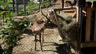 Le Vaud: le parc animalier de la Garenne reste ouvert