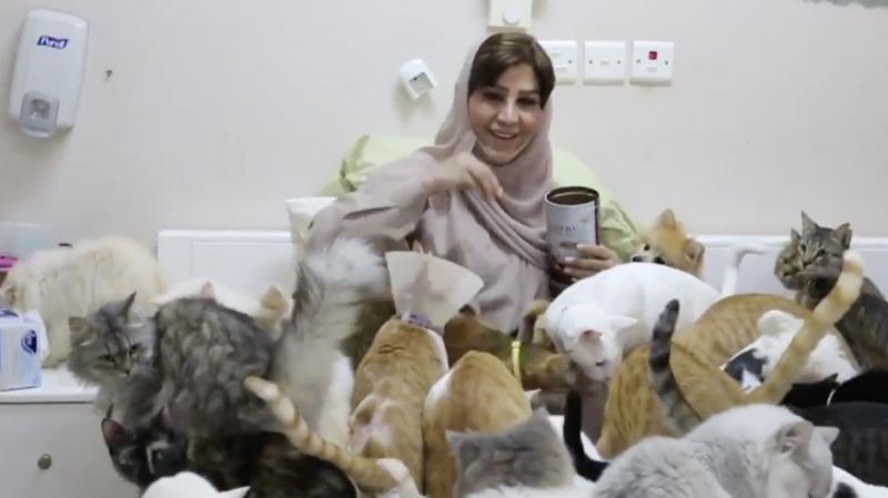 Insolite: à Oman, une femme a accumulé presque 500 chats