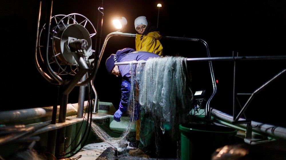 Alexandre Fayet et sa fille Laura ont pu exceptionnellement pêcher de la féra en période de fraie pour prendre des géniteurs et participer à l'effort de repeuplement.