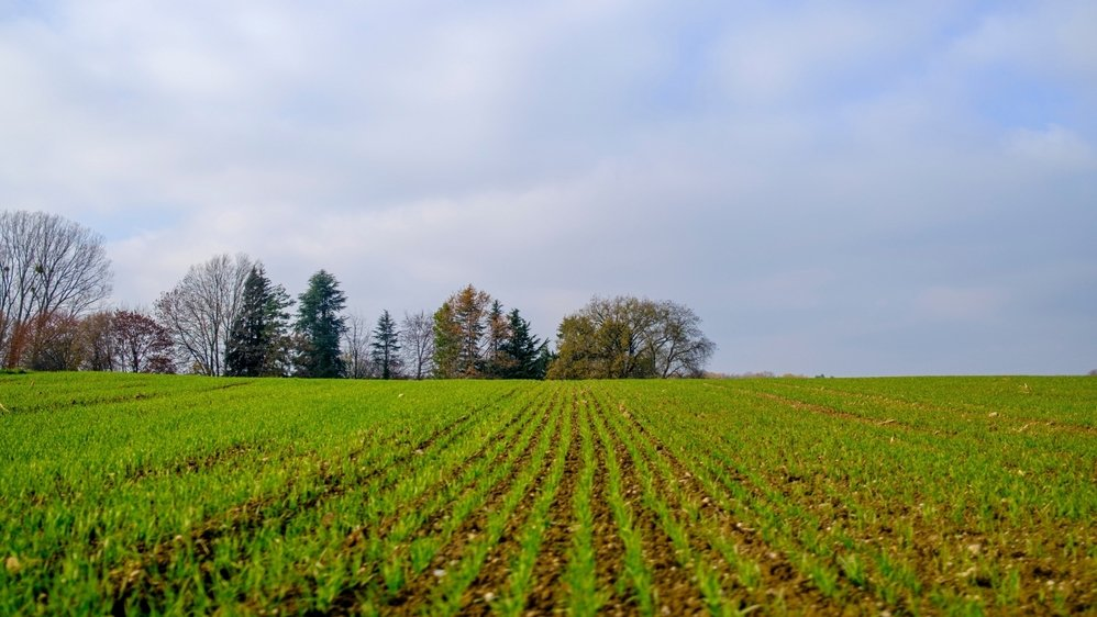 Qu'est ce qui pousse dans nos champs en hiver?