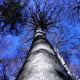 Balade-exercices en conscience en forêt
