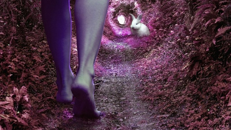 Report en cours - Alice, retour aux merveilles
