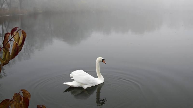 Le cygne a été relâché sur la rivière Fulda (archives).