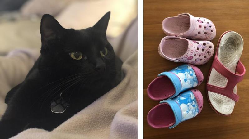 Gland: «Nina», la chatte voleuse de «crocs»