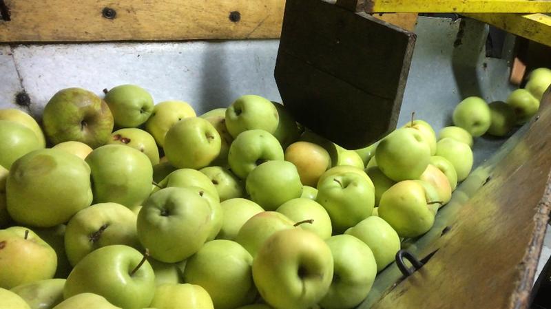 A Penthalaz, on s'organise pour récupérer les fruits et les légumes
