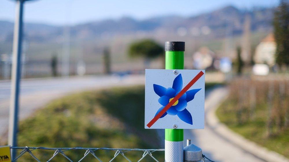 A l'instar des indications pour le déneigement, ces petits panneaux avec une ancolie délimitent les zones propices à la biodiversité qui nécessitent un entretien sur mesure de la part des cantonniers.