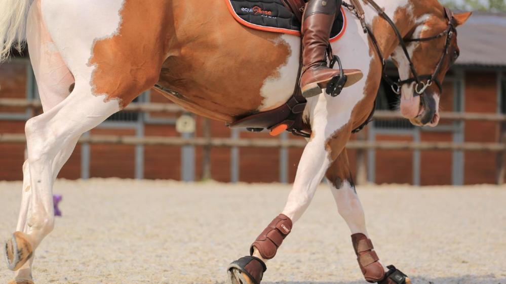 Les objets connectés sont devenus indispensables dans le monde du sport, y compris dans celui de l'équitation.