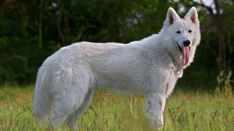 Gland: un chien électrocuté près d'un réverbère