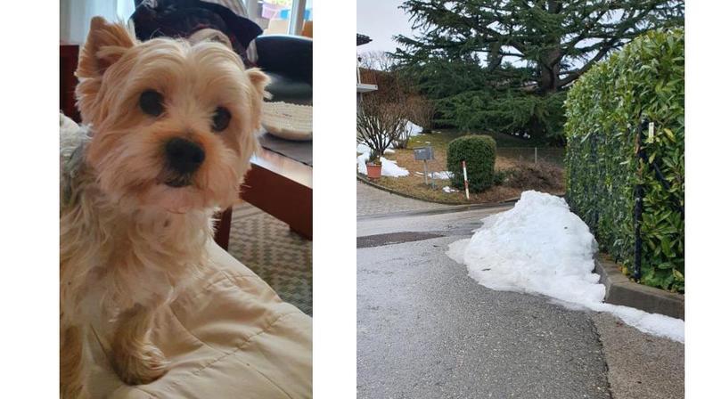Begnins: une voiture écrase un chien et prend la fuite