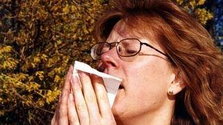 Gare aux allergies: le noisetier fleurit
