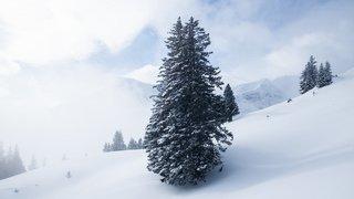 Météo: foehn et neige en perspective dans les Alpes