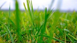 Saint-Prex en faveur de jardins plus naturels