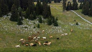 Le Parc Jura vaudois veut renouveler son label