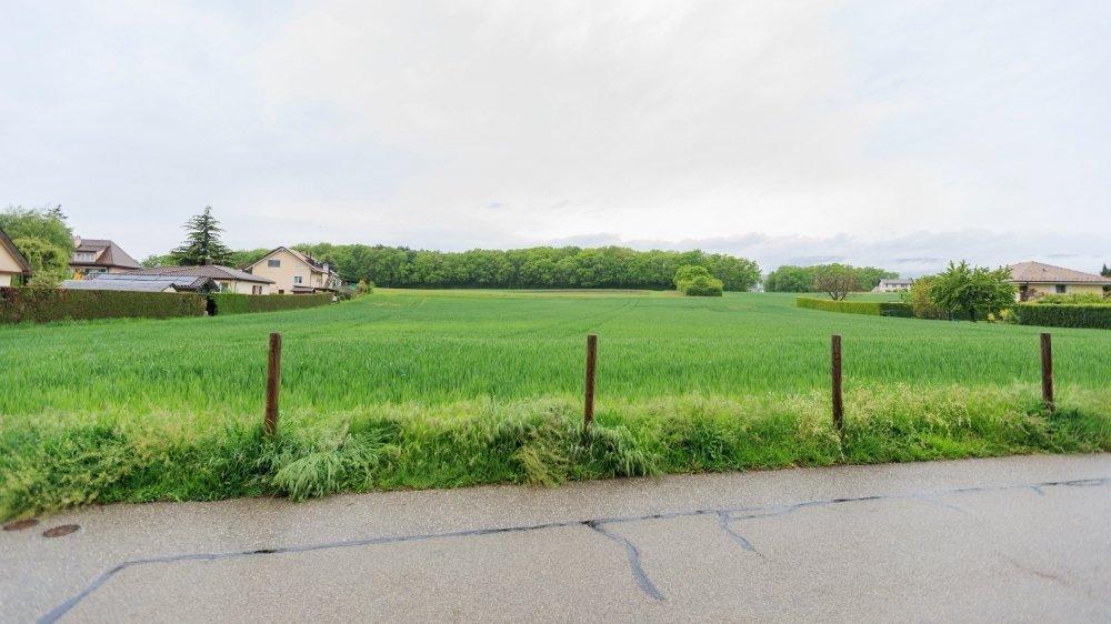 Ce terrain d'environ un hectare, au chemin de la Tuilière, accueillera le futur EMS.