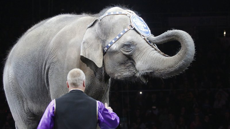 Des organisations demandent une interdiction des animaux sauvages dans les cirques