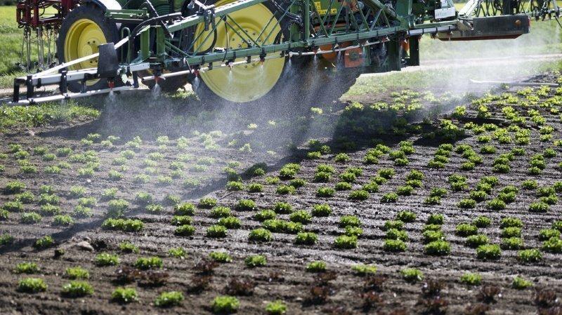 Les Suisses se prononceront sur les deux initiatives liées aux pesticides le 13 juin prochain.