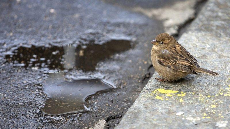 Environnement: les Suisses invités à compter les oiseaux de leurs jardins
