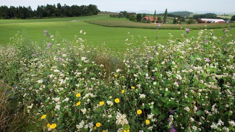Biodiversité plus faible en plaine que dans les montagnes