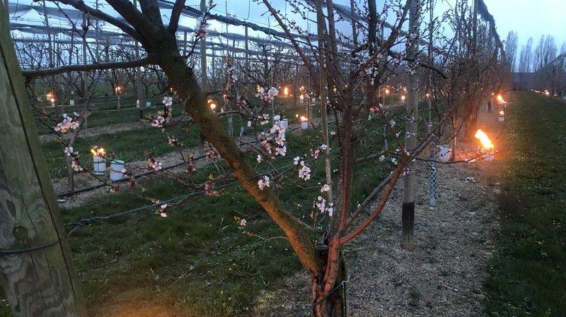 Le gel provoque des nuits blanches pour les arboriculteurs de La Côte
