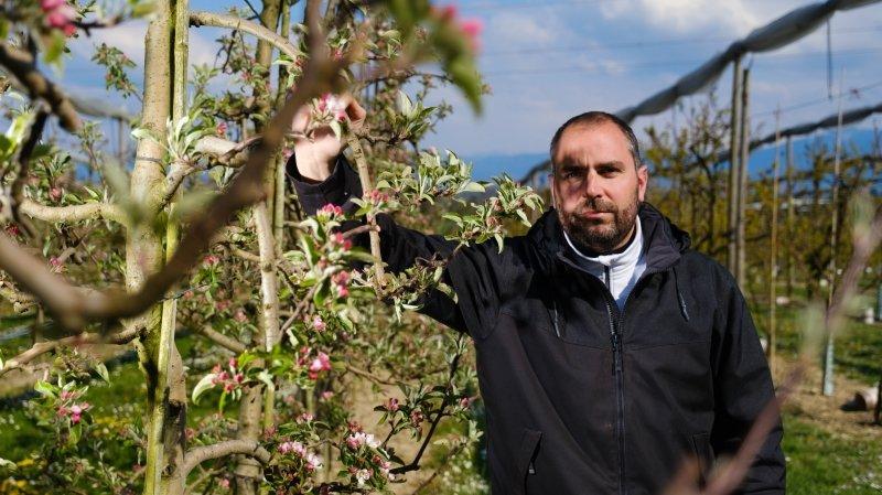 Cultures ravagées par le gel: pas de miracles pour les arboriculteurs de La Côte