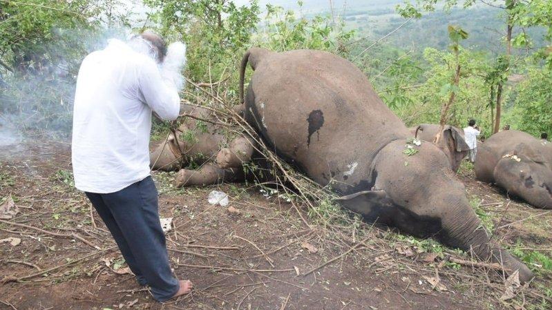 Découverte en Inde d'au moins 18 dépouilles d'éléphants, «sans doute tués par la foudre»