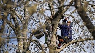 Au Mormont, un zadiste chute de son arbre