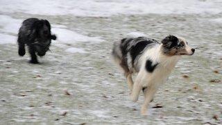 Les chiens, prédateurs ignorés, doivent être tenus d'avril à juillet