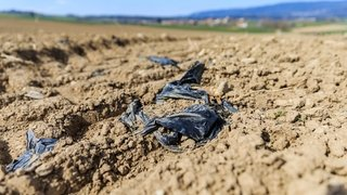 Les chanvriers sèment plastique et colère sur La Côte