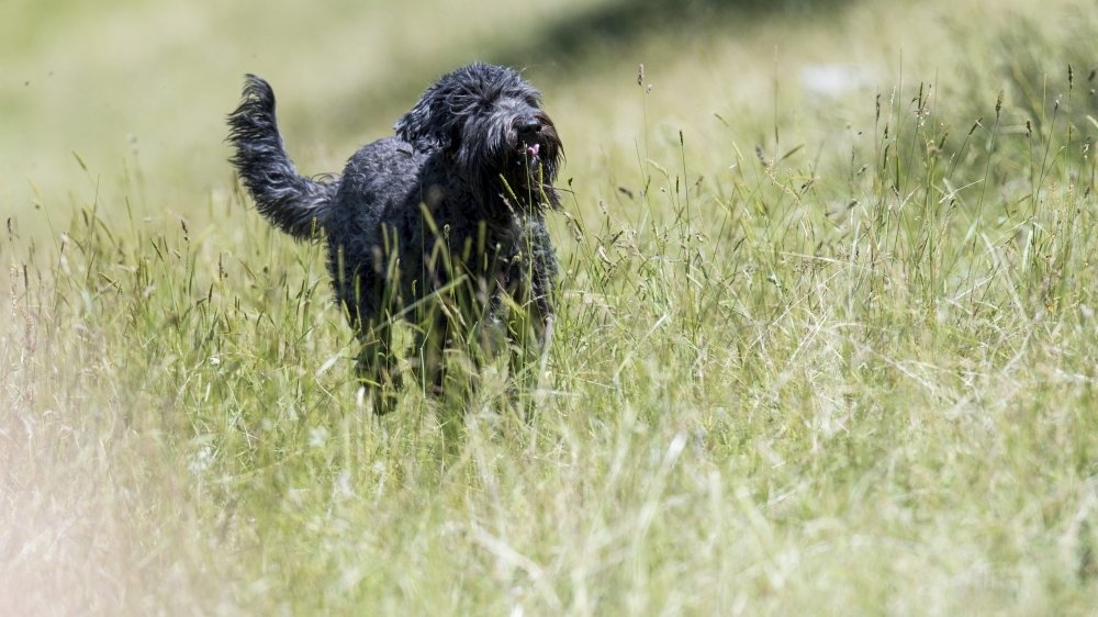 La solution du parc canin commence à être évoquée dans les communes de la région, pour contrebalancer le tour devis donné par le canton.