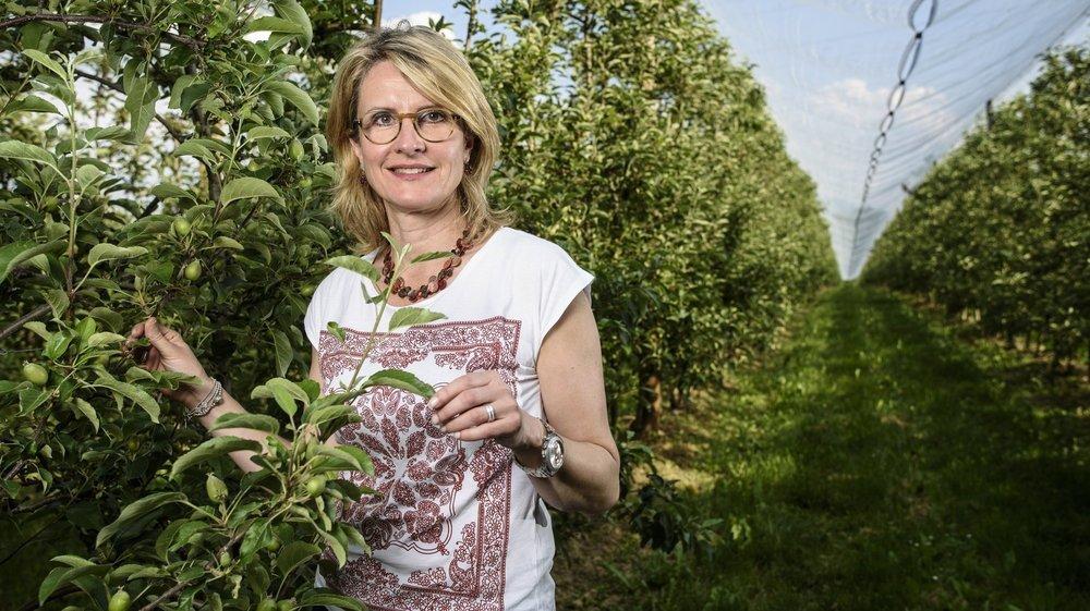 Laurence Jobin avoue ne pas constater de saturation du marché des pommes sur La Côte, ce qui permet de maintenir une bonne solidarité entre arboriculteurs.
