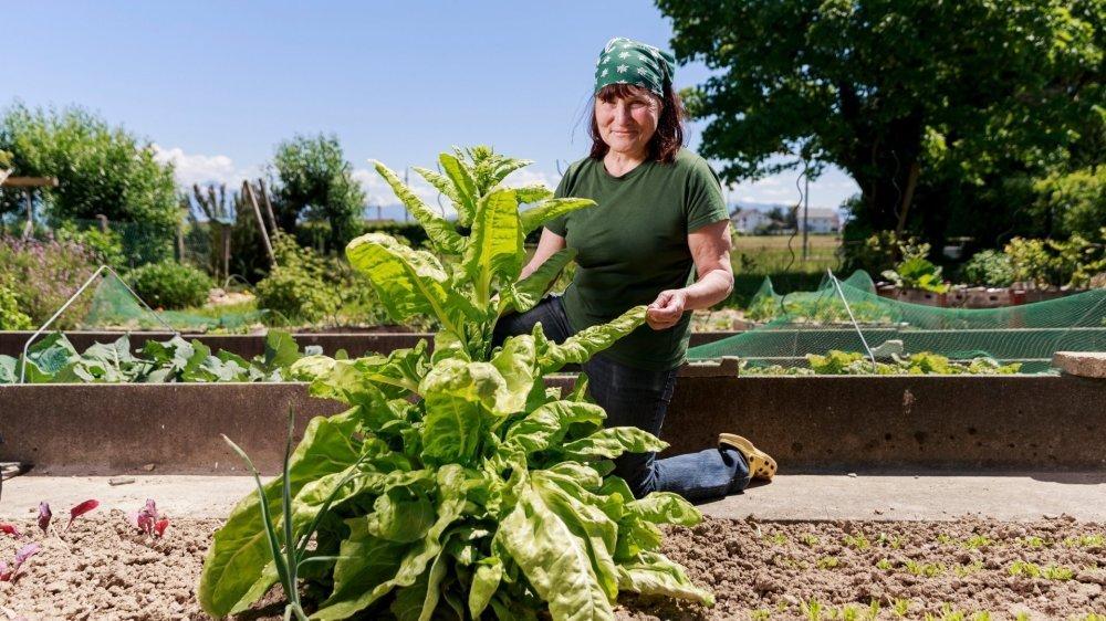 Therese Morand cultive notamment de la laitue asperge.