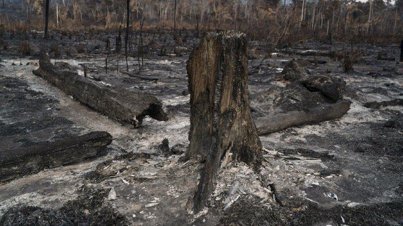 Record d'incendies pour un mois de juin en Amazonie