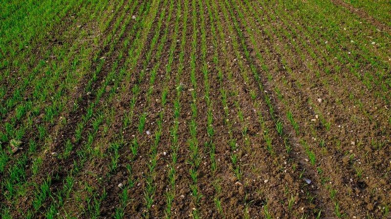 Vaud veut étendre ses terres agricoles au pied du Jura