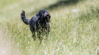 Nyon: un parc canin pour soulager les propriétaires de chien?