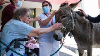 A Morges, deux ânes rendent visite régulièrement aux résidents d'un EMS