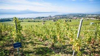 Les vignerons sont souvent plus proches du bio qu'ils ne l'affichent