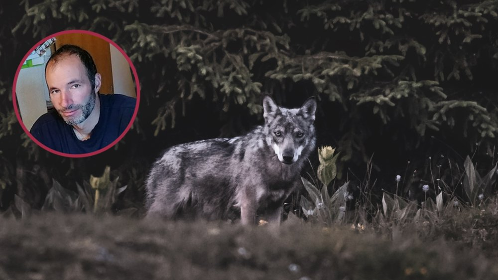 Pour l''éleveur Nicolas Bally, il n'y a pas de solution miracle face au loup.