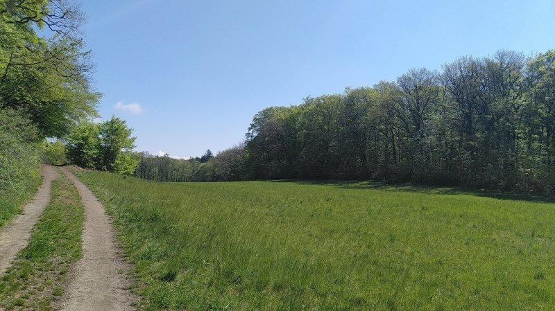 Bain de Forêt - Méditation en déambulation