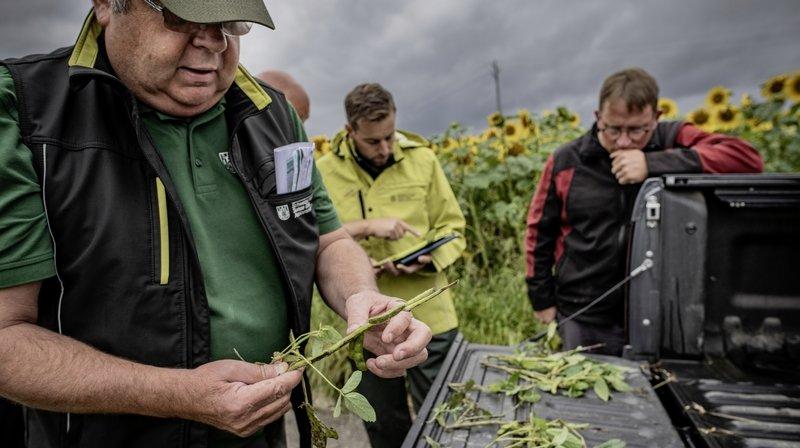 Grêle: les experts constatent les dégâts causés à l'agriculture